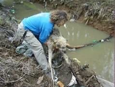 צביקה לזרוביץ מחלץ כלב נטוש בתעלת מים ליד מושב גנות