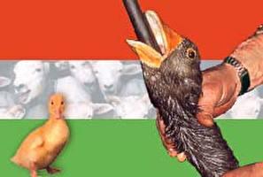 הונגריה: כלוא כמו ציפור