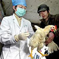 בעלי-חיים בסין