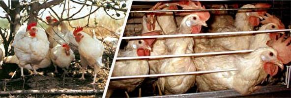 ארגון הסחר העולמי והחיות
