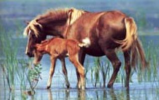 עינוי סוסים בתעשיית המרוצים