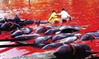 לוויתנים בסכנה: בין יפן לאוסטרליה