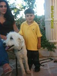 מלחמה בלבנון ובישראל: בעלי-החיים