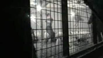 אנגליה: עובדי לול הורשעו בהתעללות