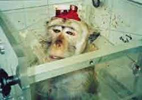 עתירה נגד ניסויים בקופים