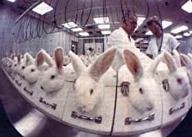 המאבק נגד ניסויים בחיות בתחום הקוסמטיקה