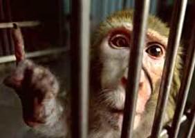 אל על והקופים