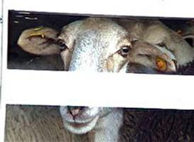 ארצות-הברית 2006: בעלי-חיים בחוק ובמשפט