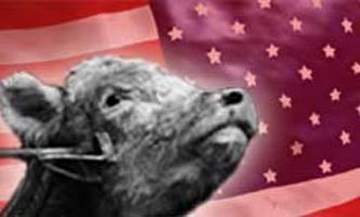 אכזריות כשרה בארצות-הברית