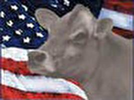 ארצות-הברית 2009: בעלי-חיים בחוק ובמשפט