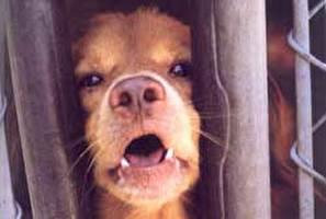 4 הסתייגויות לחוק הכלבים
