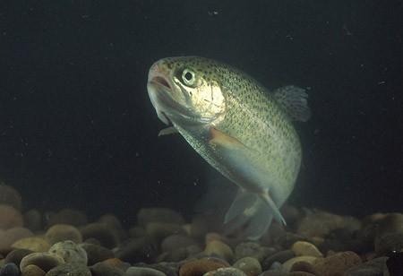 האם לצרכנים אכפת מדגים?