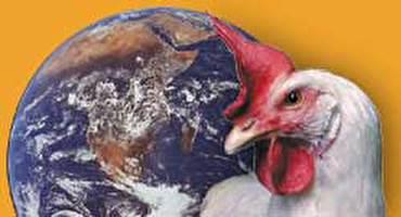 """האו""""ם ורווחת בעלי-חיים"""