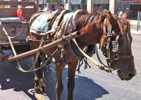 המפגש העצוב שלי עם סוס מוזנח