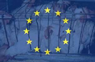 חדשות באירופה, 2004