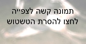 פרה קורסת (Compassion Over Killing)