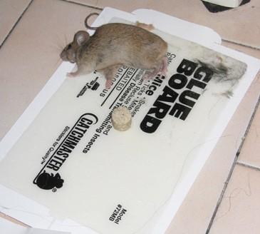 מודרני המאבק נגד מלכודות דבק - אנונימוס לזכויות בעלי חיים XS-07